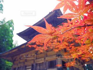 寺社巡りで見つけた小さい秋の写真・画像素材[782137]