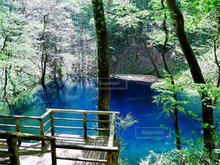 青池の神秘的な光景の写真・画像素材[842259]