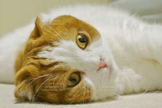 猫の写真・画像素材[312422]