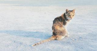 猫 - No.2245