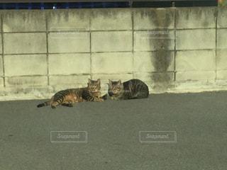 猫の写真・画像素材[307751]