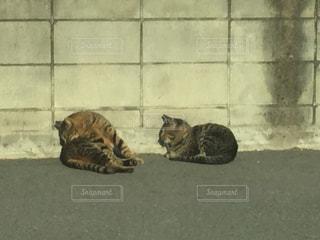 猫の写真・画像素材[307753]