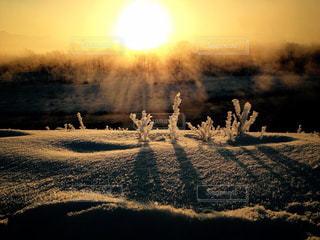 冬の写真・画像素材[310993]