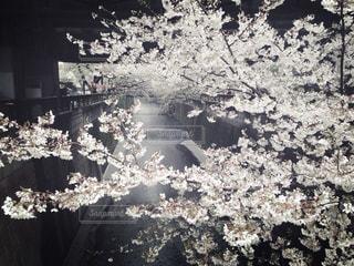 春の写真・画像素材[375958]
