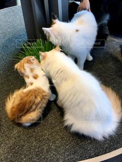 猫が好きの写真・画像素材[308089]