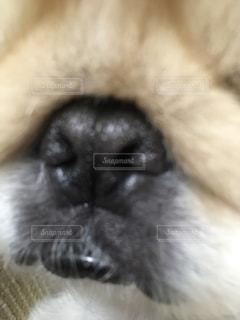 No.313654 犬