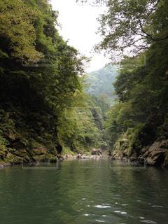 森林の写真・画像素材[307832]