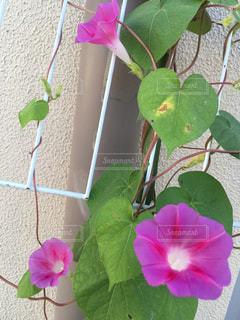 花の写真・画像素材[308022]