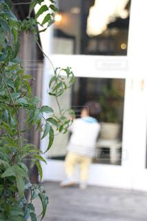 カフェの写真・画像素材[309891]