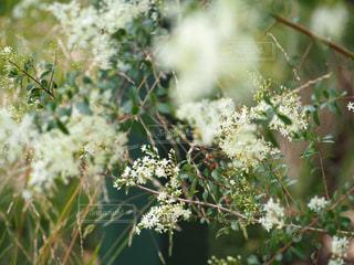 自然の写真・画像素材[308239]