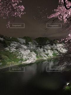 桜 - No.308461