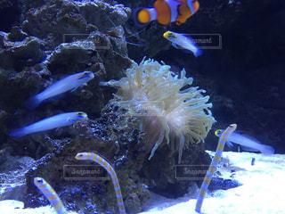 魚 - No.388367