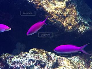 魚 - No.388368