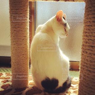猫が好きの写真・画像素材[313845]