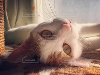 近くに毛布の上に横になっている猫のアップの写真・画像素材[1693261]