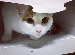 白い面の上に座って猫の写真・画像素材[1693262]