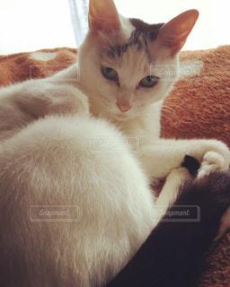 白い面の上に座って猫の写真・画像素材[1693263]