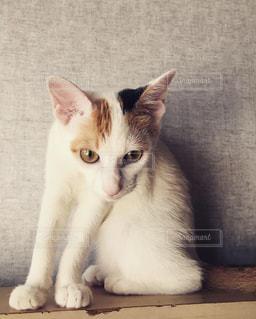 白い面の上に座って猫の写真・画像素材[1693266]