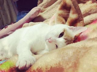 ベッドの上で横になっている猫の写真・画像素材[1693700]