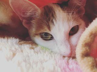 近くに猫のアップの写真・画像素材[1693707]