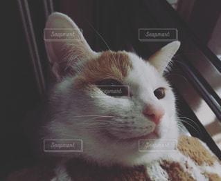 近くに猫のアップの写真・画像素材[1696394]