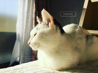 白い面の上に座って猫の写真・画像素材[1698373]