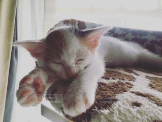 ベッドの上で横になっている猫の写真・画像素材[1698376]