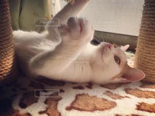 遊んでる猫の写真・画像素材[1716823]