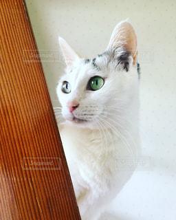 猫の写真・画像素材[2197611]