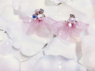 花の写真・画像素材[308455]