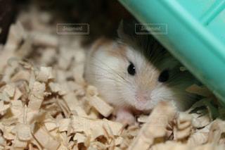 動物の写真・画像素材[691880]