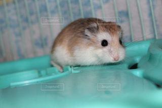 動物の写真・画像素材[691881]