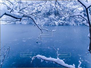 自然の写真・画像素材[8189]