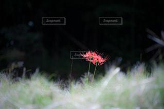 自然の写真・画像素材[8188]