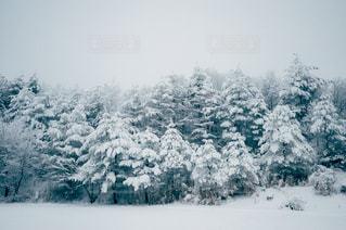 自然の写真・画像素材[8172]