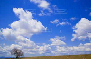 自然の写真・画像素材[8163]