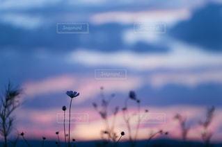自然の写真・画像素材[8160]