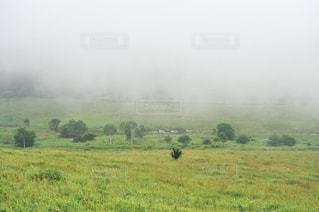 自然の写真・画像素材[8153]