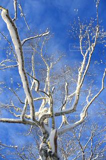 自然の写真・画像素材[8138]