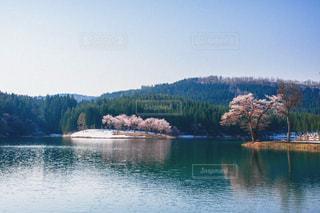 自然の写真・画像素材[8126]