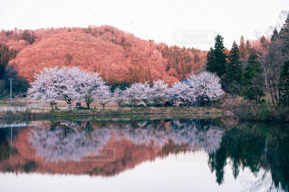自然の写真・画像素材[8120]