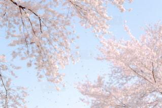 春の写真・画像素材[8119]