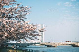 春の写真・画像素材[8108]