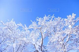 木の写真・画像素材[8101]