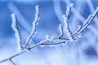 冬の写真・画像素材[8095]
