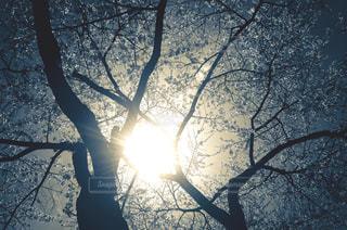春の写真・画像素材[8090]