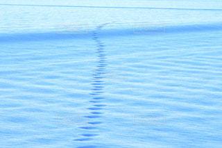 冬の写真・画像素材[8087]