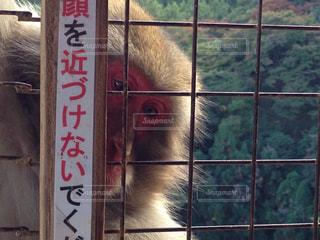 No.310777 猿