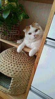 猫の写真・画像素材[311358]