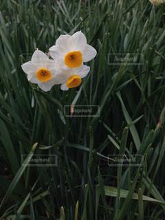 花の写真・画像素材[312637]